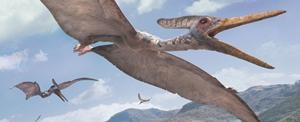 Pteranodon